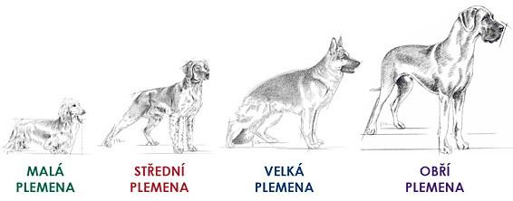 velikosti-plemena-pes